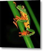 Frog Pole Vault  Metal Print