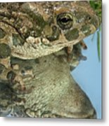 Frog Reflection Metal Print