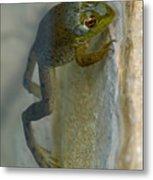 Frog Swim Metal Print