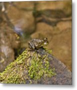 Froggy On A Hill Metal Print