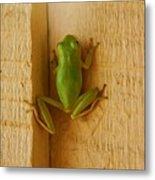 Froggy Metal Print