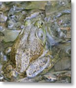 Frogs Eye View Metal Print