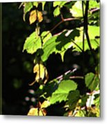 From Behind The Grapevine Metal Print