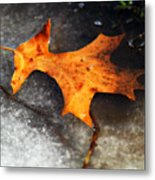 From Last Fall Metal Print