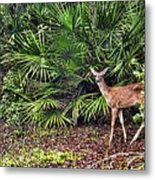 From The Palmetto Bushes Metal Print by Jan Amiss Photography