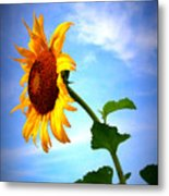 From The Side Metal Print