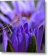 From The Water Lily Garden Metal Print