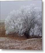 Frost And Fog Metal Print