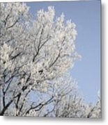 Frost Cover Maple Trees Metal Print