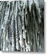 Frost Covered Pine Needles IIi Metal Print