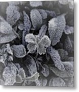 Frost On Leaves 1 Metal Print