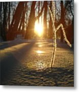 Frost On Sapling At Sunrise Metal Print