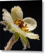 Frost On The Flower Metal Print