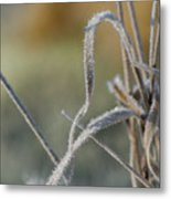 Frost On The Stems Metal Print
