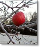 Frosted Apple Metal Print