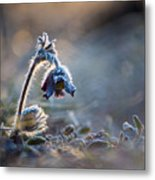 Frosted Beauty Metal Print
