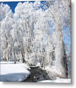 Frosted Cottonwoods Metal Print