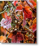 Frosted Fall Metal Print