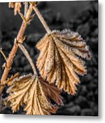 Frosted Flake Metal Print