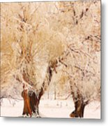 Frosted Golden Trees Metal Print