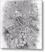 Frosted Grapes Vignette Metal Print