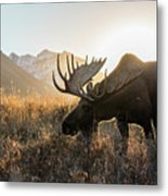 Frosted Grass For Breakfast Metal Print