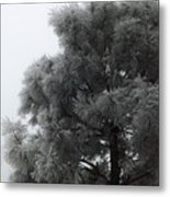 Frosted Pine Metal Print