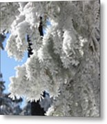 Frosted Pine Needles Metal Print