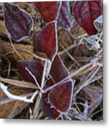 Frosted Red Green Briar Metal Print