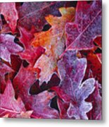 Frosted Red Oak Leaves Metal Print