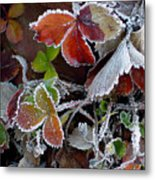 Frosted Strawberries Metal Print