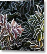 Frosted Tips Metal Print