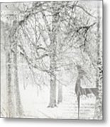 Frosted Winter Metal Print