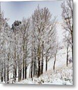 Frosty Aspen Trees Metal Print