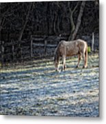 Frosty Autumn Morning Metal Print