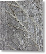 Frosty Birch Tree Metal Print