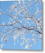 Frosty Branch Metal Print