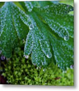 Frosty Dewdrops Metal Print