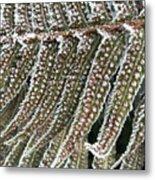 Frosty Fern - 365-322 Metal Print