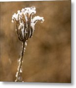 Frosty Flower Remains Metal Print