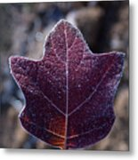 Frosty Lighted Leaf Metal Print