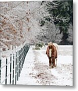 Frosty Mare Metal Print