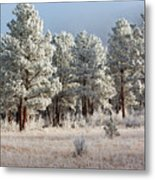Frosty Pikes National Forest Metal Print