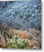 Frosty Prickly Pear Metal Print