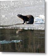 Frosty River Otter  Metal Print