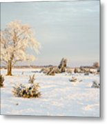 Frosty Solitude Tree In The First Morning Sunshine Metal Print