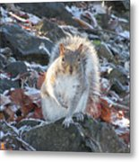 Frosty Squirrel Metal Print