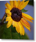 Frosty Sunflower Metal Print