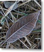 Frosty Veined Leaf Metal Print