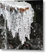Frozen Branch Metal Print